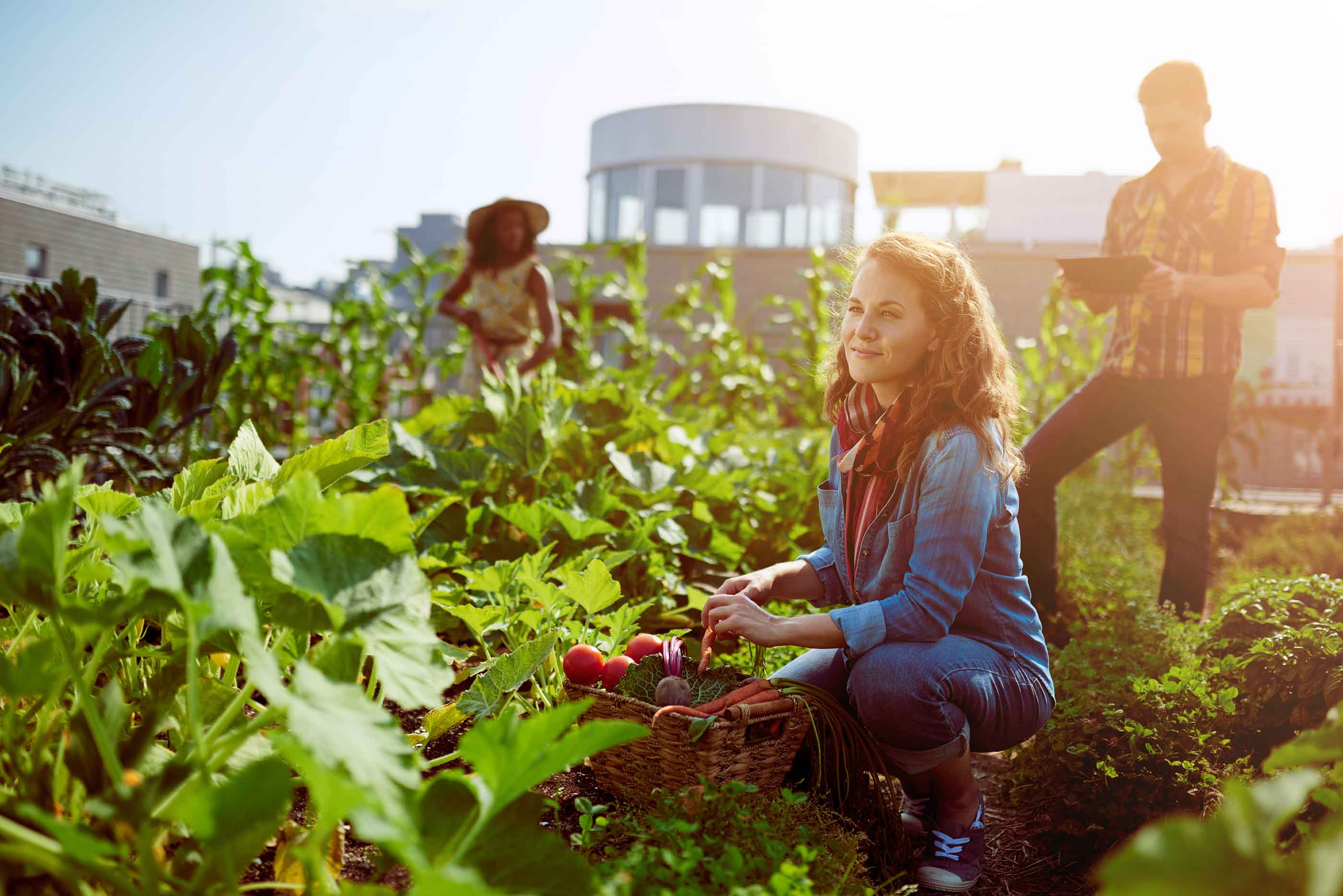 Un Petit Potager Productif projet d'agriculture urbaine et potager maraîcher dans le